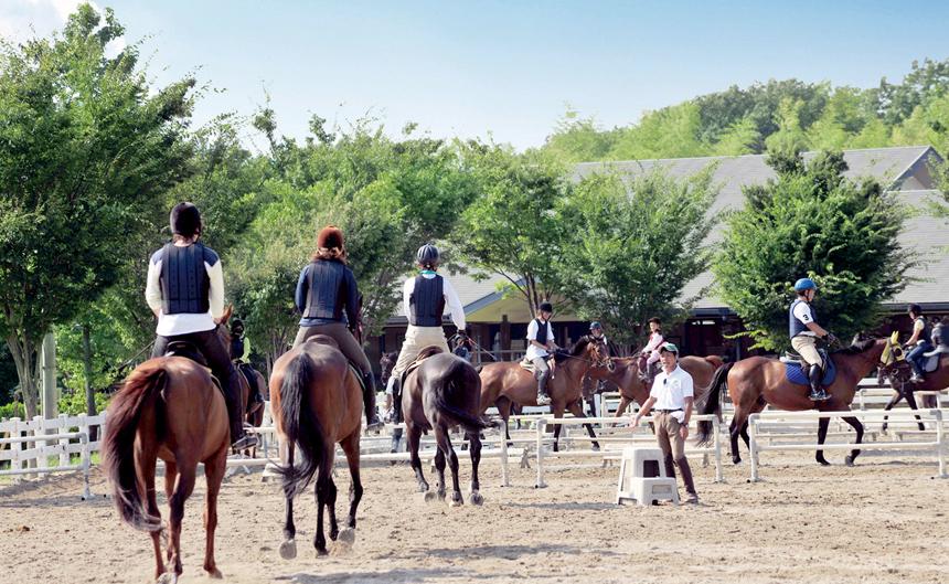 サイト 乗馬 クラブ クレイン 会員
